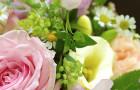 Rose-IMGP7224